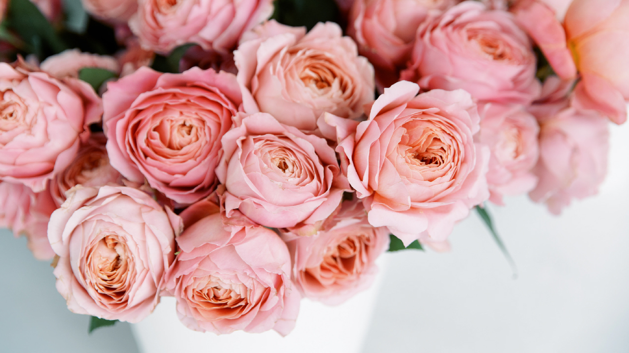 wholesale roses | flower care