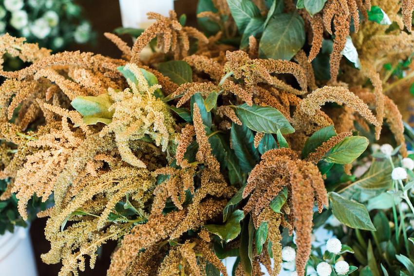 Gold Upright Amaranthus
